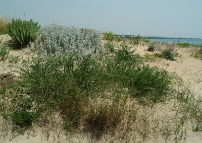 Vegetazione sulle dune